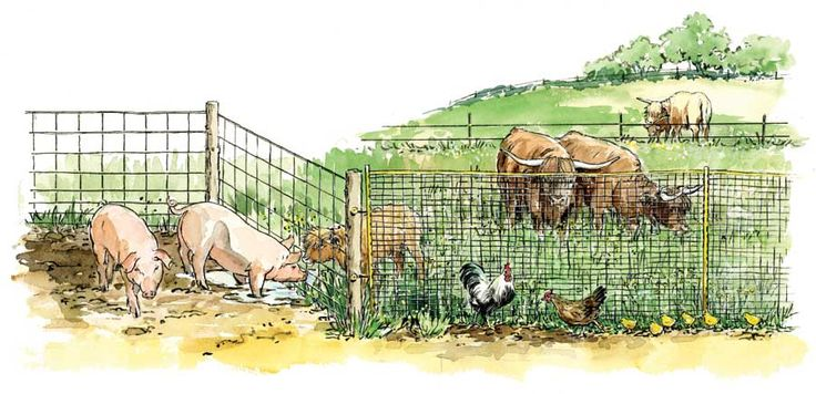 Farm Fencing: Horse High, Chicken Tight and Bull Strong - Modern Homesteading - MOTHER EARTH NEWS
