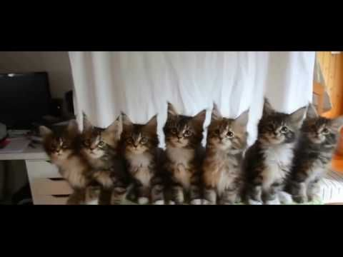 "TRY NOT TO LAUGH OR GRIN - Funny Cat Fails Compilation 2016 - http://positivelifemagazine.com/try-not-to-laugh-or-grin-funny-cat-fails-compilation-2016-18/ http://img.youtube.com/vi/LOBtQSUOGg0/0.jpg  ***Get your free domain and free site builder*** Click to Surprise me! Please follow and like us:  			var addthis_config =  				 url: """", 				 title: """""