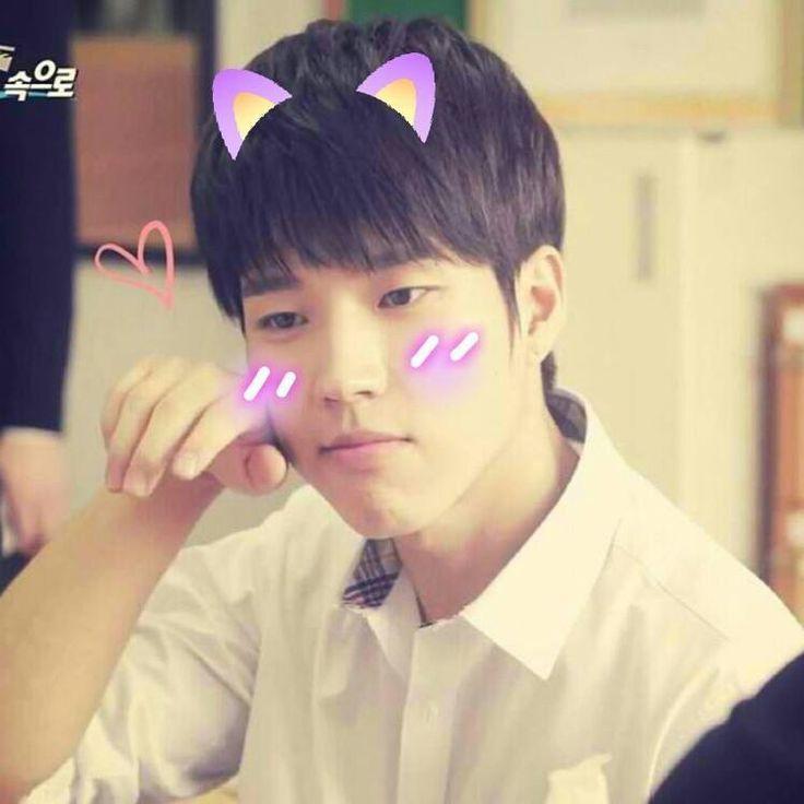 Woohyun cat