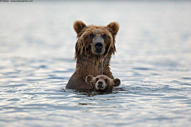 Nuoto stile orso