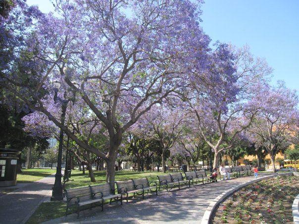 San Jose Tourism: 152 Things to Do in San Jose, CA