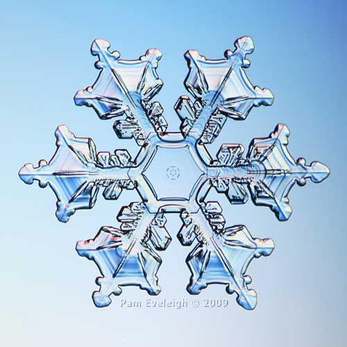 Real Snowflake Dec 30, 2009