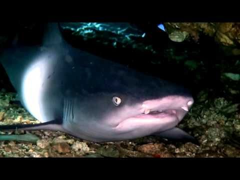 Филиппины. Потрясающе красивый подводный мир.