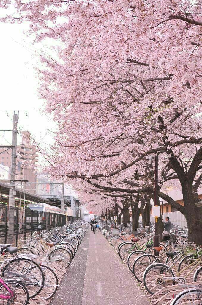Jepang Wisata jepang, Fotografi alam, Pemandangan
