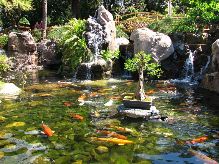 317 best images about koi pond on pinterest japanese koi for Japanese koi pond