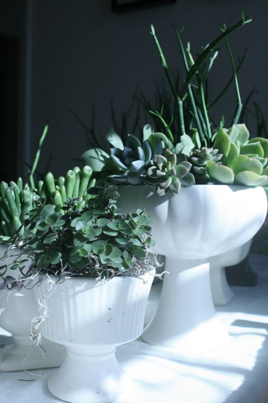So here's how you do it. Procure vessels. Buy flower foam. Soak flower foam in water. Cut pieces of foam to fit into vessels. Hack apart succulents. Arrange clippings into flower foam/vessels in pleasing manner. If necessary, fill space around the outside of the vase/pot with either little pebbles or spanish moss. VOILA!