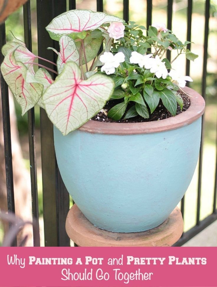 Why Painting Terra Cotta Pots and Pretty Plants Should Go Together