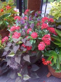 "This site has great ideas for plant combos for your flower beds or for containers.  In containers, put a ""thriller"" (something tall), a ""filler"" (plants to fill in the middle), and a ""spiller"" (plants that trail over the edge)."