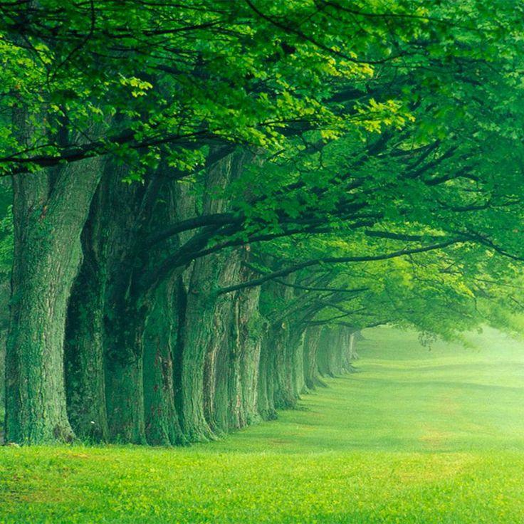 Attraverso le citazioni sugli alberi abbiamo l'impressione di ritrovarci nella natura più verdeggiante, tra foreste, boschi e piantagioni incontaminate: un bel viatico per lasciare da parte lo smog cittadino.