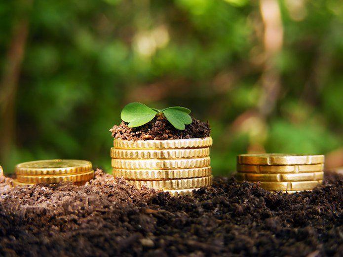 Mint Energie : 1er fournisseur d'électricité verte et low-cost