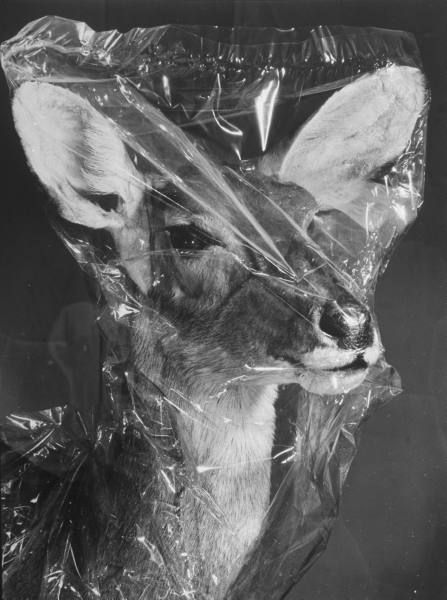 Flora & FaunaPhotos, Animal Skin, Animal Attack, Plastic Bags, Black And White, Art, Nature Historynew, History Museums, Animal Farms