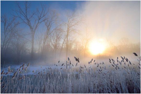 Frozen by Phoenixrider