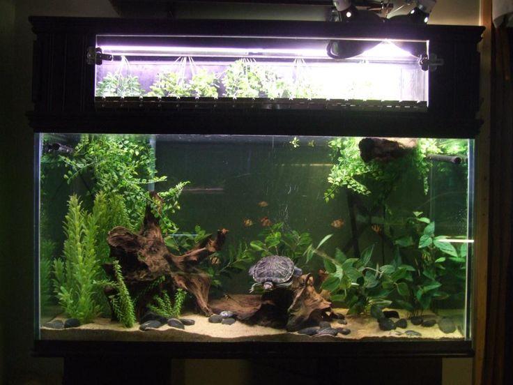 90 gallon planted aquarium with RES turtle: Aquatic Turtle