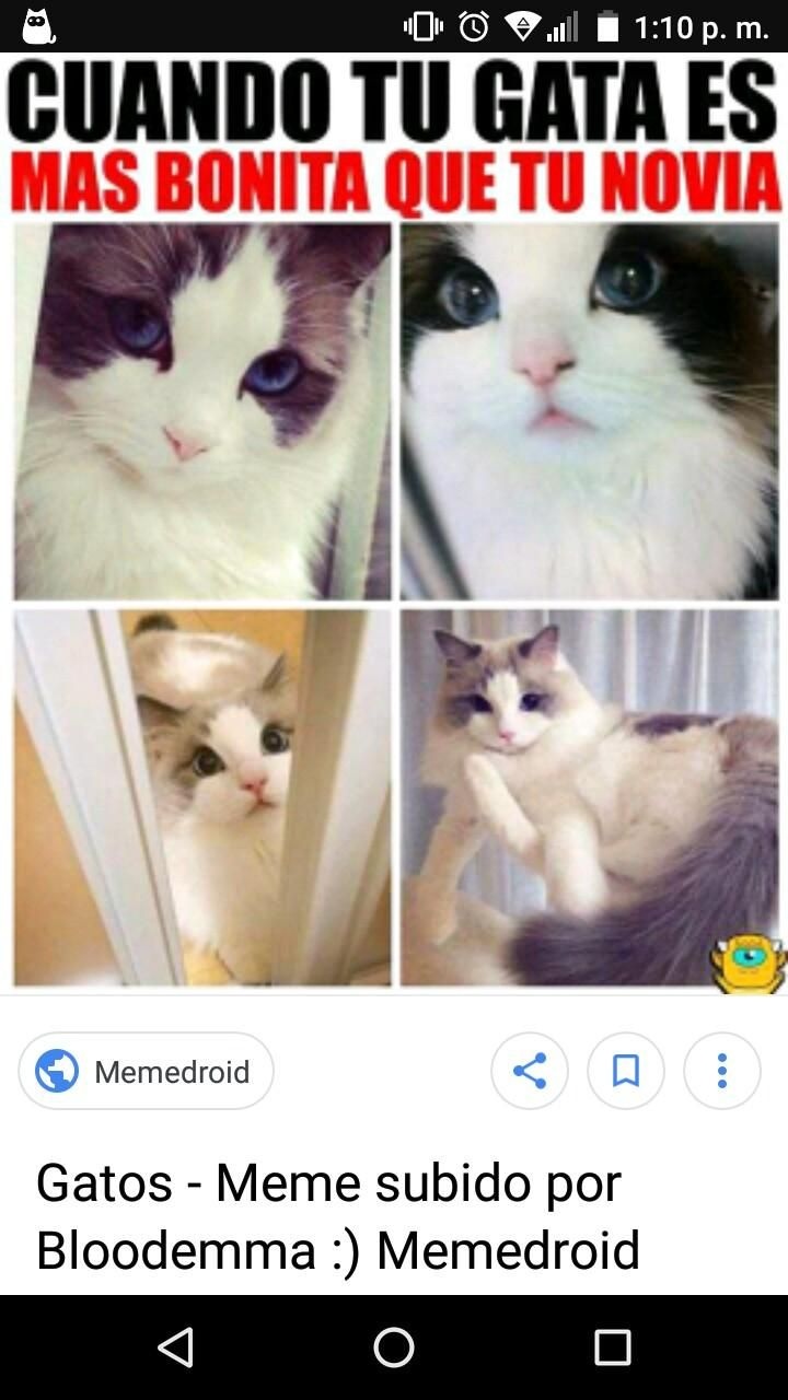 Un Meme Para El Empezar El Dia Jejejejejeje Jejejeje Expertoanimal Mundoanimal Reinoanimal Anim Humor Divertido Sobre Animales Meme Gato Memes Divertidos