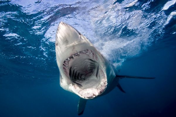 Cue the Jaws theme song because two great white sharks have been spotted off the coast of Cape Cod.