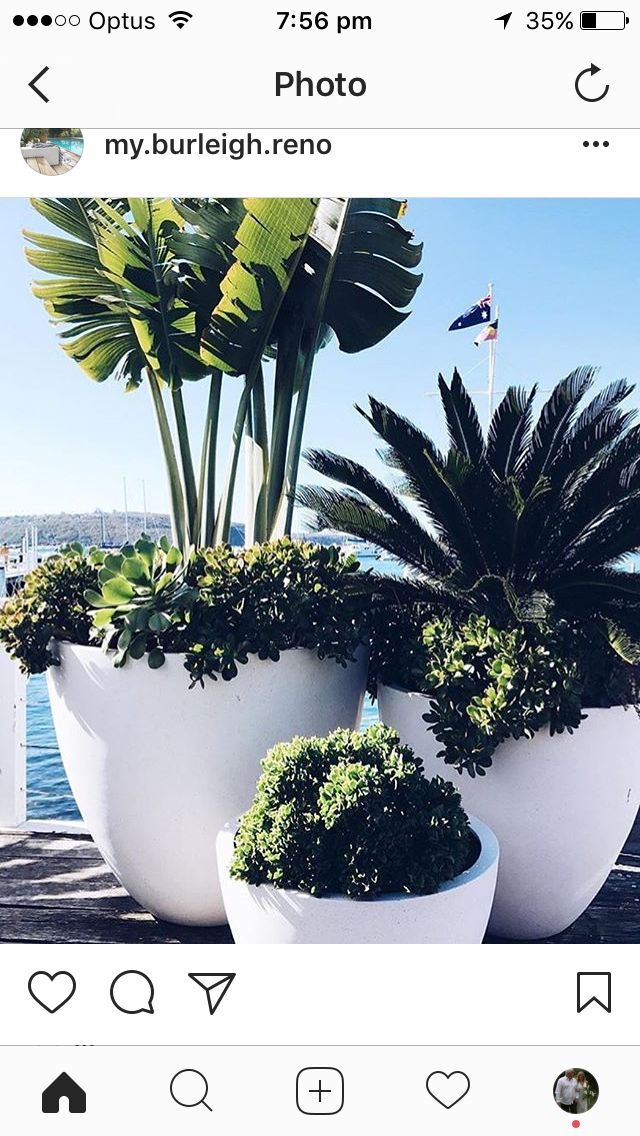 striking trio of potted greenery