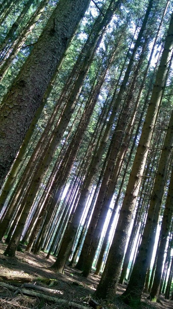 Germering Forest near Munich - it looks like something from Hansel and Gretal! #fairytaleforest #travelling