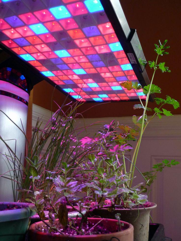 Buy LED Grow Lights | LED Lighting System Australia //.aqualed.com. au/product-category/grow-lights/ One stop shop to buy LED Grow Lights. & Best 25+ Grow lights led ideas on Pinterest | Grow lights Tube ... azcodes.com