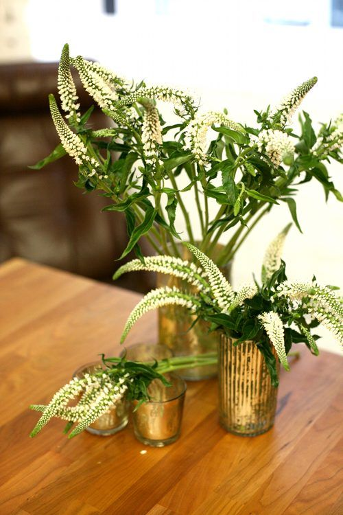 Veronica: Veronica has beautiful tiny flowers that grow on a narrow, spike-like head. Their length makes them perfect for working into bouquets, but they also look lovely in a low trailing centerpiece for tables.
