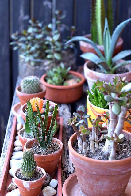 Urban Jungle Bloggers: My Plant Gang by @panyizsuzsi