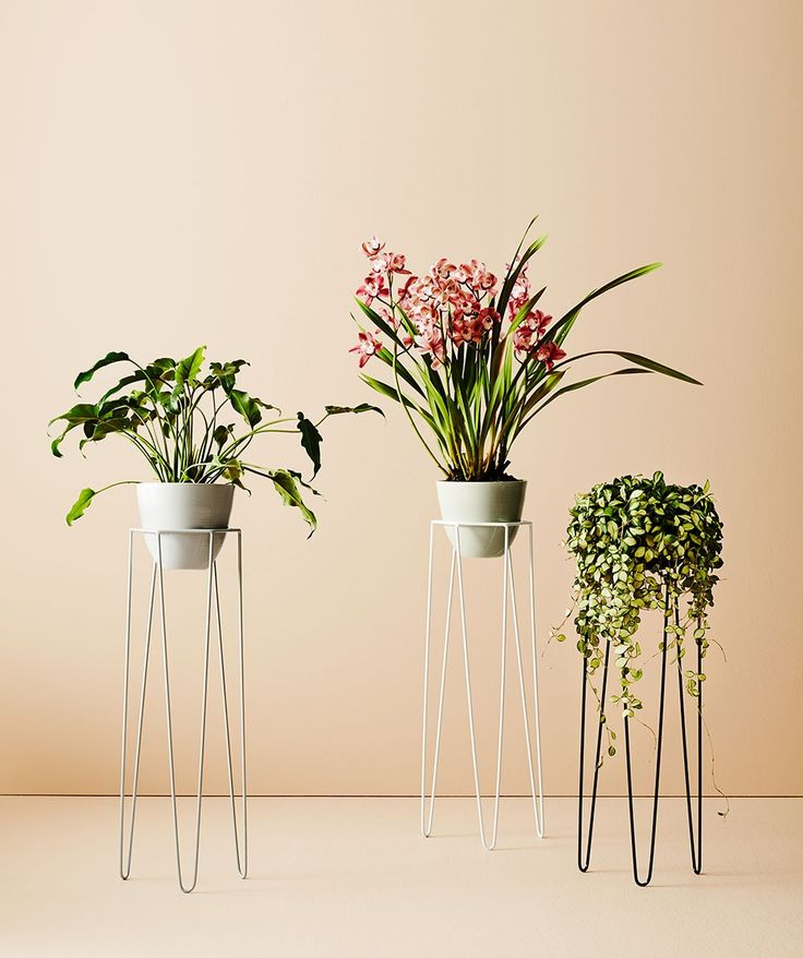 The Quartz plant stand displays the perfect mix of feminine and masculine design, with its slim legs and hexagon top. | huntingforgeorge.com