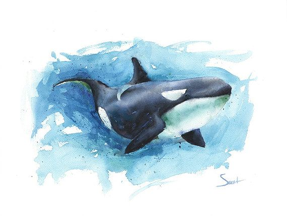 Hey, I found this really awesome Etsy listing at https://www.etsy.com/listing/232534089/orca-art-print-watercolor-orca-painting