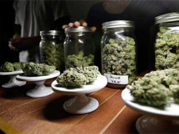 Despenalización cultural sobre el consumo de cannabis trascenderá en nuevas políticas https://www.lavozdelafrontera.com.mx/mexicali/despenalizacion-cultural-sobre-el-consumo-de-cannabis-trascendera-en-nuevas-politicas?utm_campaign=crowdfire&utm_content=crowdfire&utm_medium=social&utm_source=pinterest