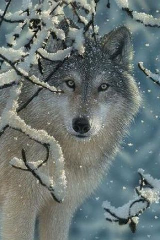 Stunning winter wolf (digital wallpaper)