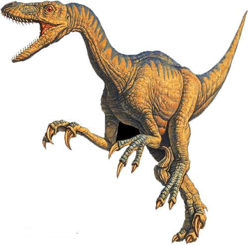 comparing tyrannosaurus rex and raptor essay Report of information essay tion essay follows the outline finally, have students compare anci the sharp-clawed utah raptor know the tyrannosaurus rex means.