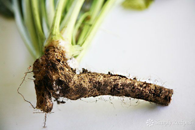How to Make Homemade Prepared Horseradish | Do you love it or hate it?