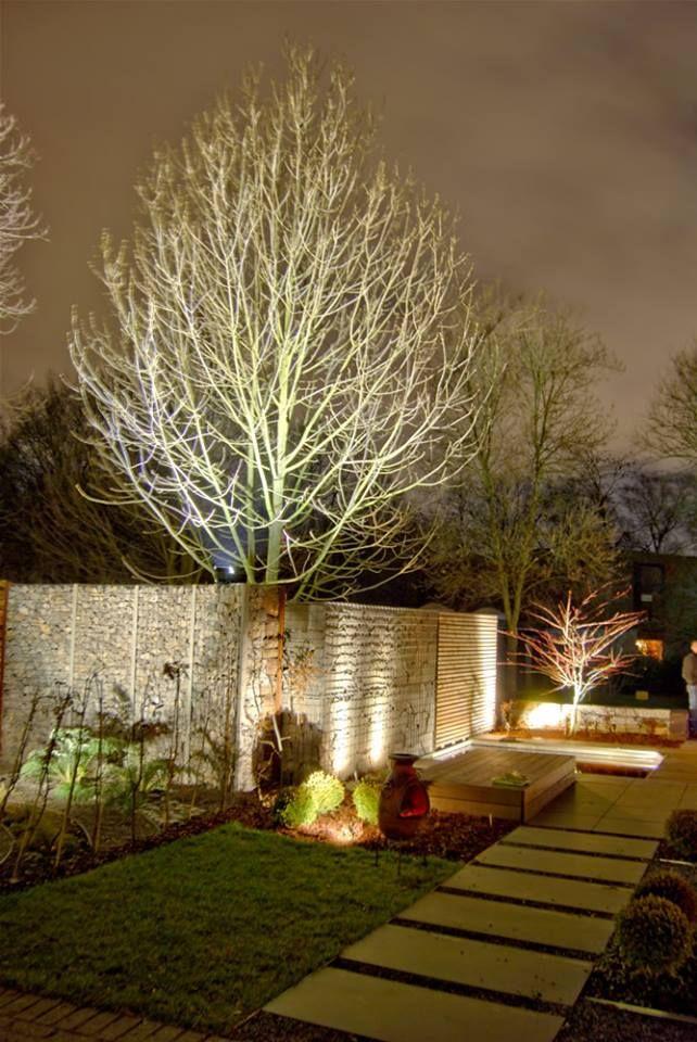 Laublos werden beleuchtete Bäume zu skurrilen Skulpturen.  Leafless trees are lit to whimsical sculptures.