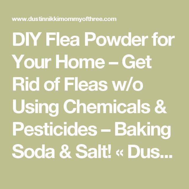 DIY Flea Powder for Your Home – Get Rid of Fleas w/o Using Chemicals & Pesticides – Baking Soda & Salt! « DustinNikki Mommy of Three