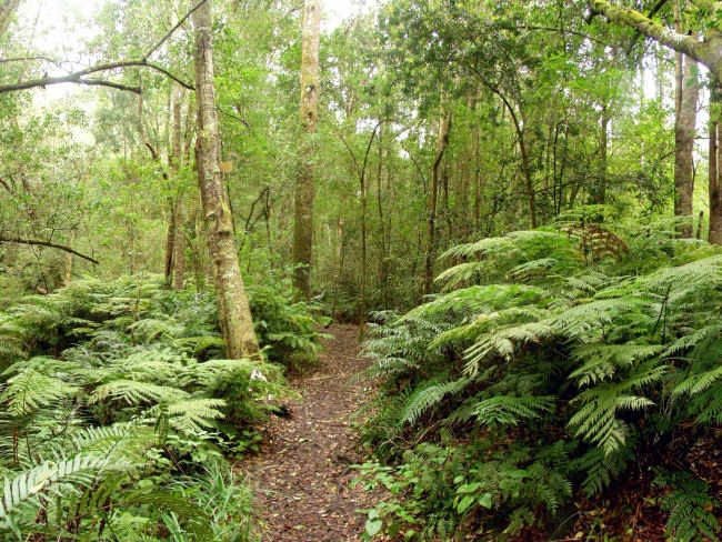 The Knysna Forest © Hide Away Guest House in Knysna
