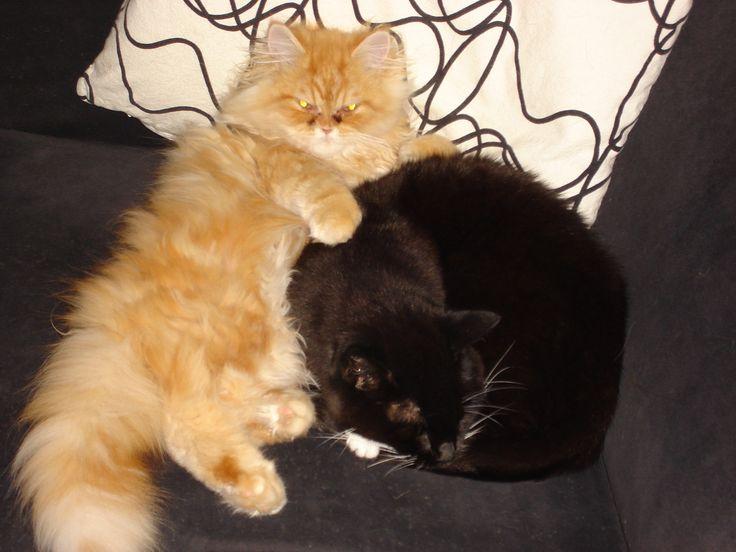 Gizmo & Banjer