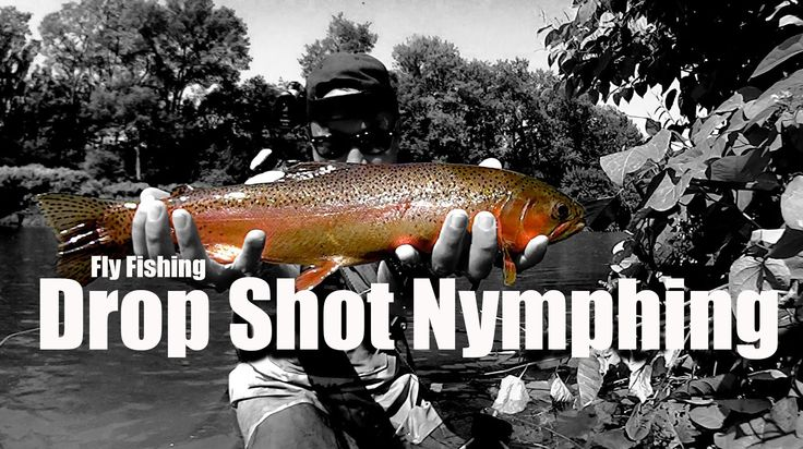 """W4F - Fly Fishing """"Drop Shot Nymphing""""  Ken Tanaka of Wish4Fish shows you how he rigs a drop shot nymph rig.  Fly fishing dries is probably more fun but nymphing is definitely more effective if done correctly.  Trout feed 90% of the time underwater so you should perfect your nymphing game."""