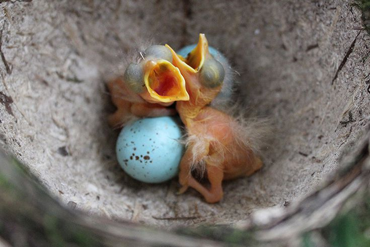 a79c5461df8412835afc1782a0817a2b - How To Get A Wild Baby Bird To Eat