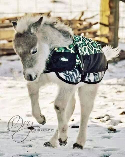 Oh. so. adorable! (Tough-1 blanket available at ChickSaddlery.com)