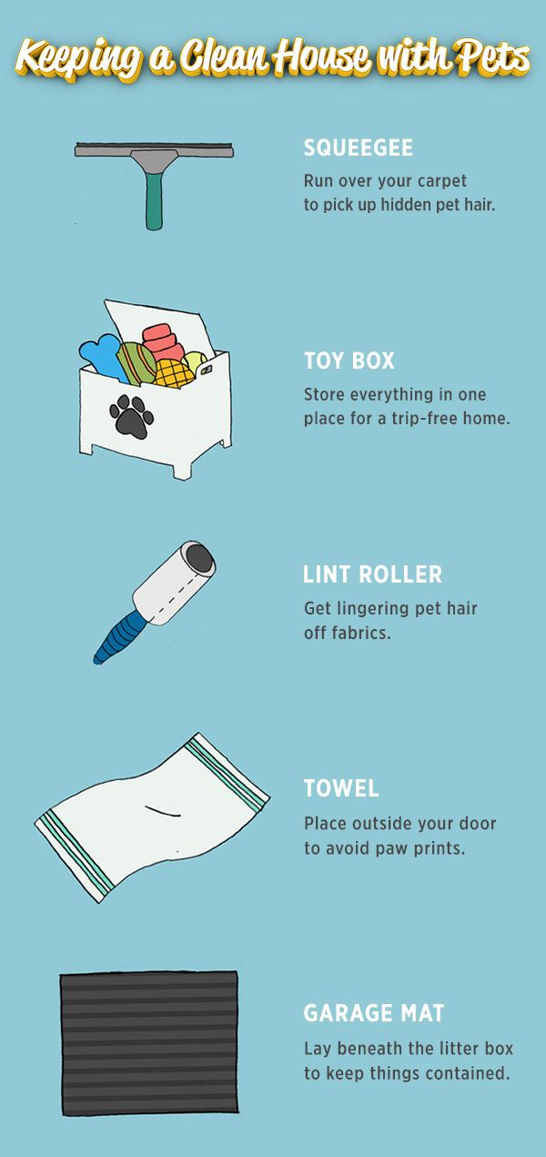 Pets are certainly cute but can be a bit messy. Clean up quick with these household items.