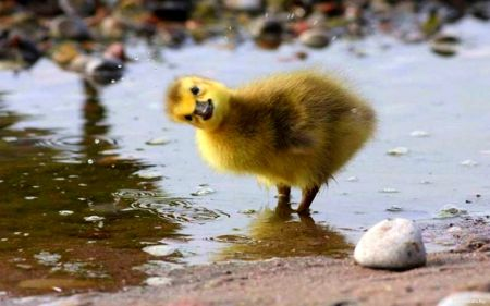 The Warm-Fuzzies: The Adorable Duckling