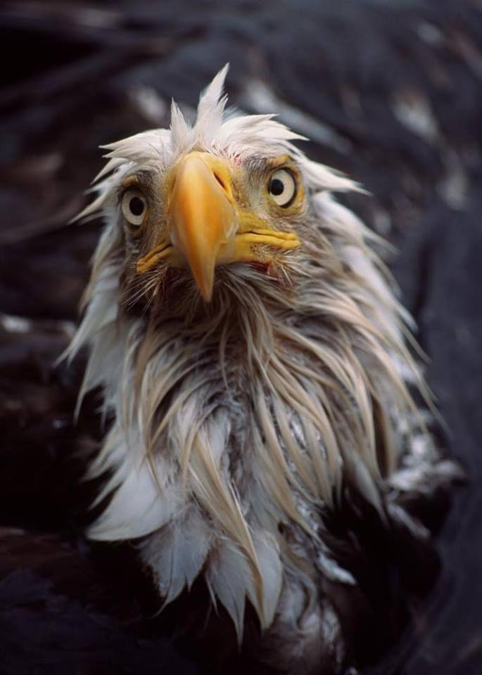 белый орел фото животные порадовать себя
