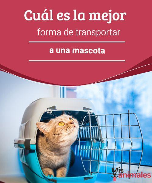 Cuál es la mejor forma de transportar a una mascota  La mejor forma de transportar a una mascota implica tener en cuenta factores como la seguridad y la comodidad de animales y personas. #mascota #transportar #forma #consejos