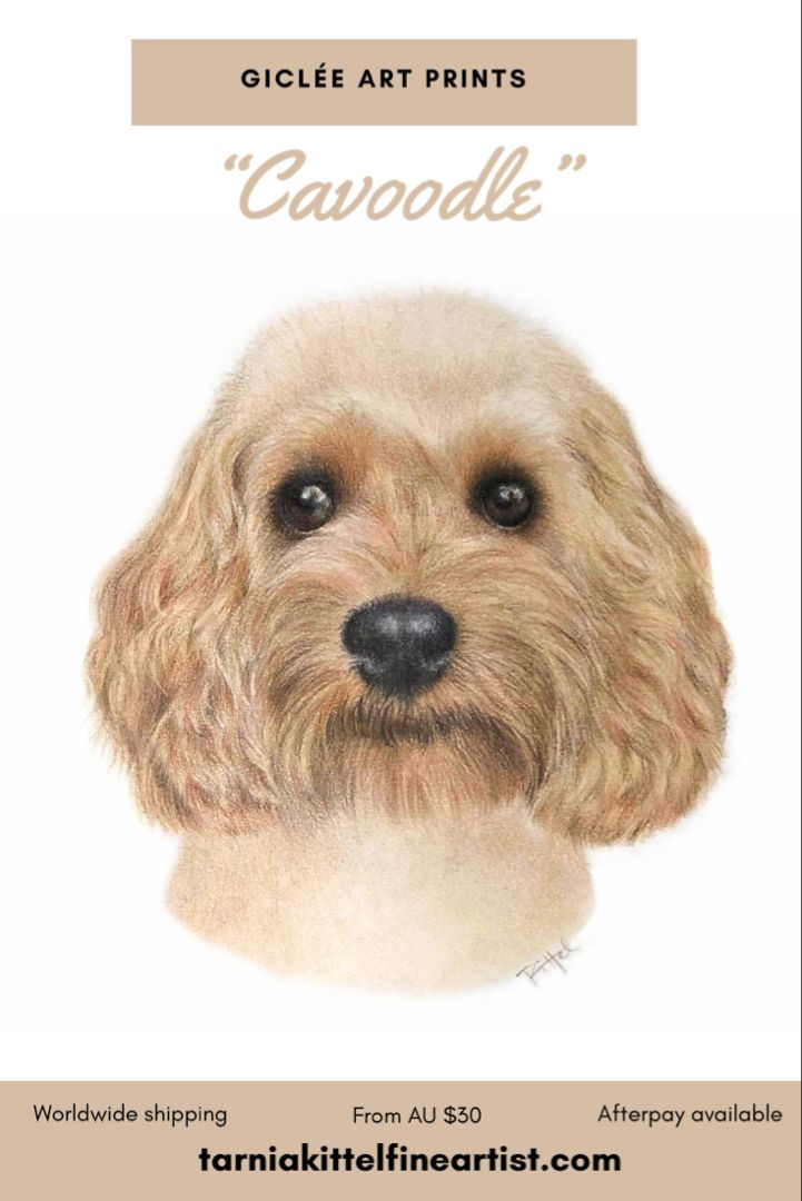 Cavoodle Giclee Print In 2020 Dog Breed Art Giclee Print Giclee