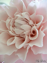 pearl necklace Pink Dahlia Gumpaste flower