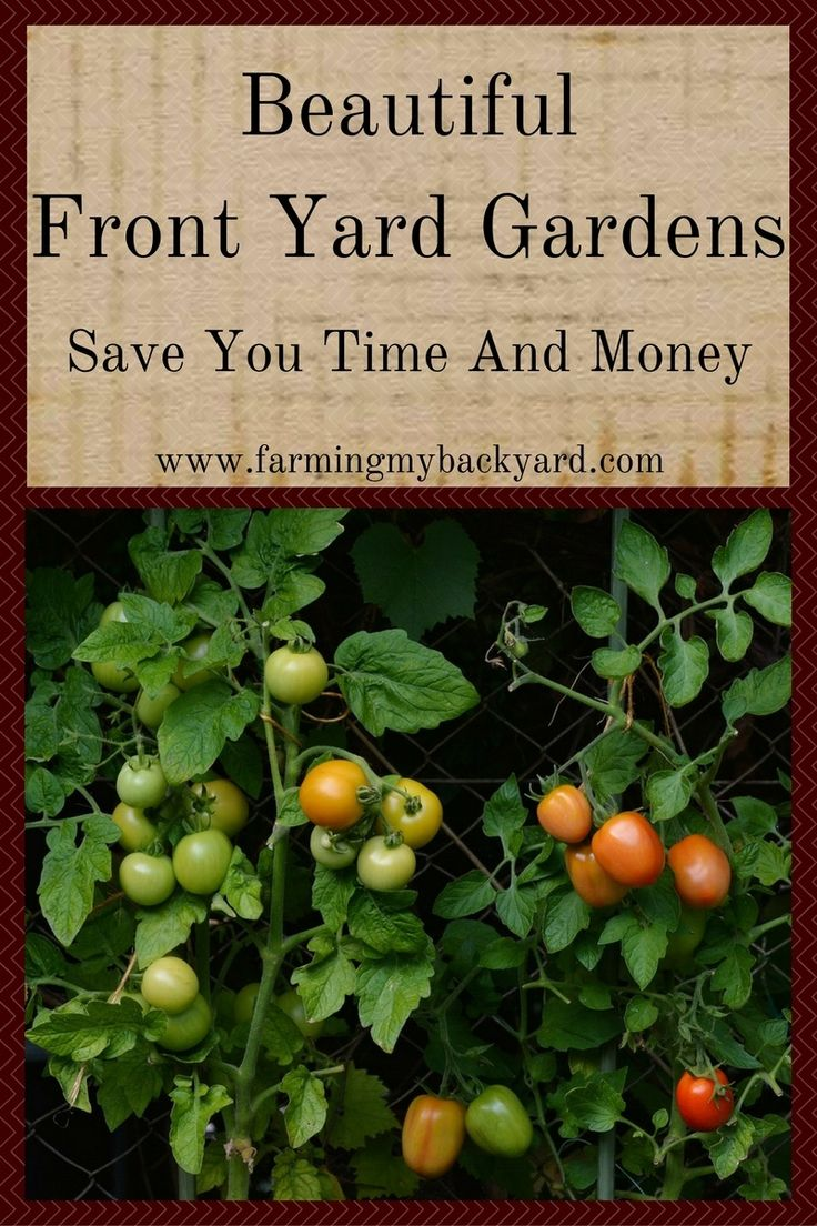 Ways to make your vegetable garden beautiful - Beautiful Front Yard Gardens Save You Time And Money Make Sour Cream Vegetable