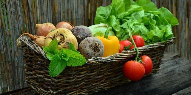 Key-Organic-Farming-Principles-and-Practices-You-Should-Know