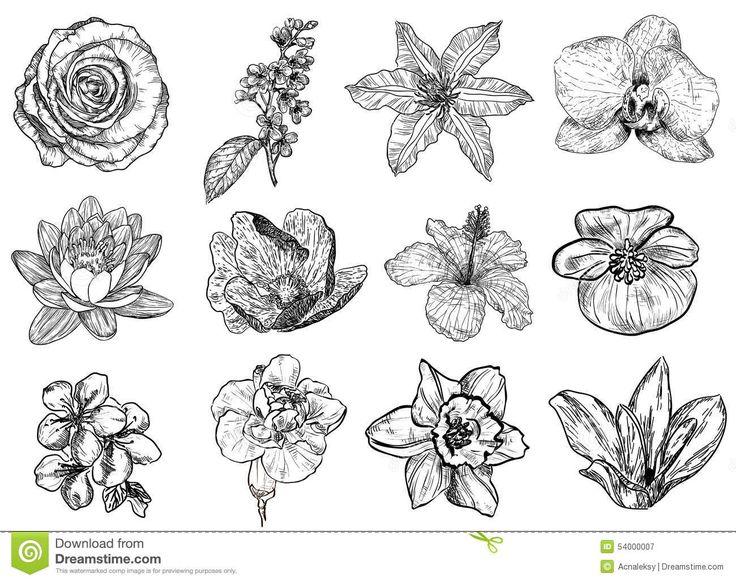 Vectorillustratie Van (zwart-witte) Bloemen - Downloaden van meer dan 40 Miljoen hoge kwaliteit stock foto's, Beelden, Vectoren. Schrijf vandaag GRATIS in. Afbeelding: 54000007