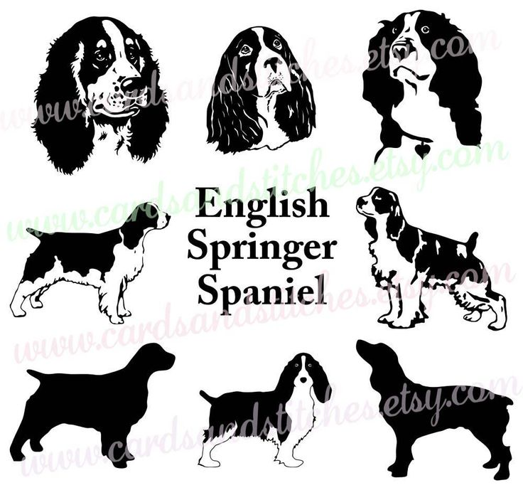Spaniel SVG - English Spaniel SVG - Spaniel Silhouette - Digital Cutting File - Cricut Cut - Instant Download - Svg, Dxf, Jpg, Eps, Png by cardsandstitches on Etsy