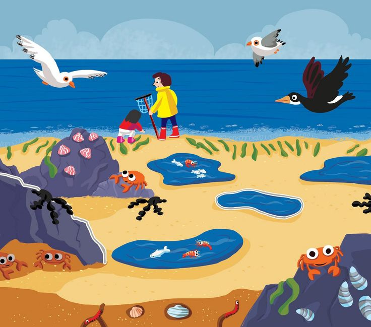 Praatplaat zee / strand