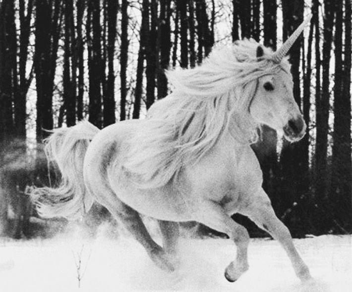 Winter unicorn.