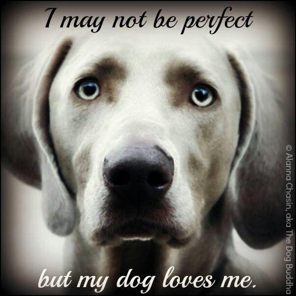 Are Boxers Good Condo Dogs